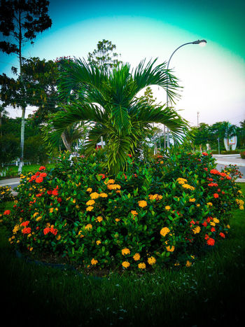 Flores UFAC Jardin Parque  University Acre Amazing Brasil