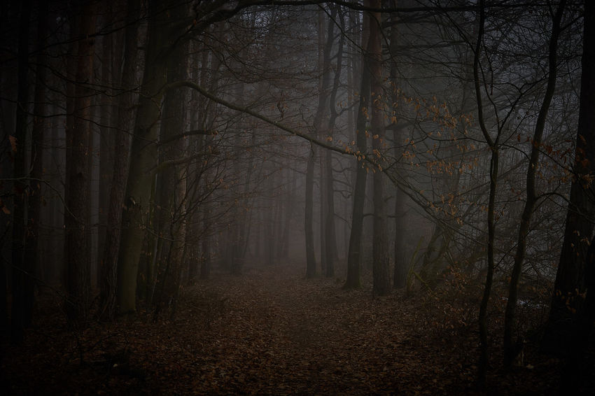 https://youtu.be/SmbNZgw9ZNs Dark Forest Foggy Weather Forest Path Mystic Adventure Autumn Beauty In Nature Branch Dark Dark Forest Path Dark Forest Road Day Fog Foggy Morning Forest Forest Trees Forestwalk Leaf Nature No People Outdoors Silence Spooky Tranquil Scene Tree