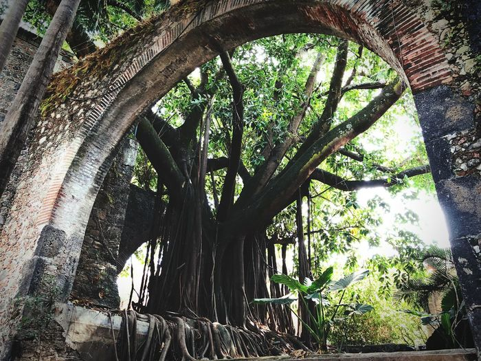 Legends never die Wallpaper Beauty In Nature Trees Old Old Buildings Tree Tree Trunk Day Low Angle View Nature No People Growth Branch Outdoors Forest Beauty In Nature