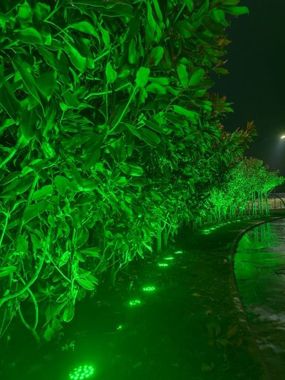 Green Color Growth Nature Backgrounds Tree Outdoors Night Huaweiphotography Nightphotography Yalovasahili Turkey City