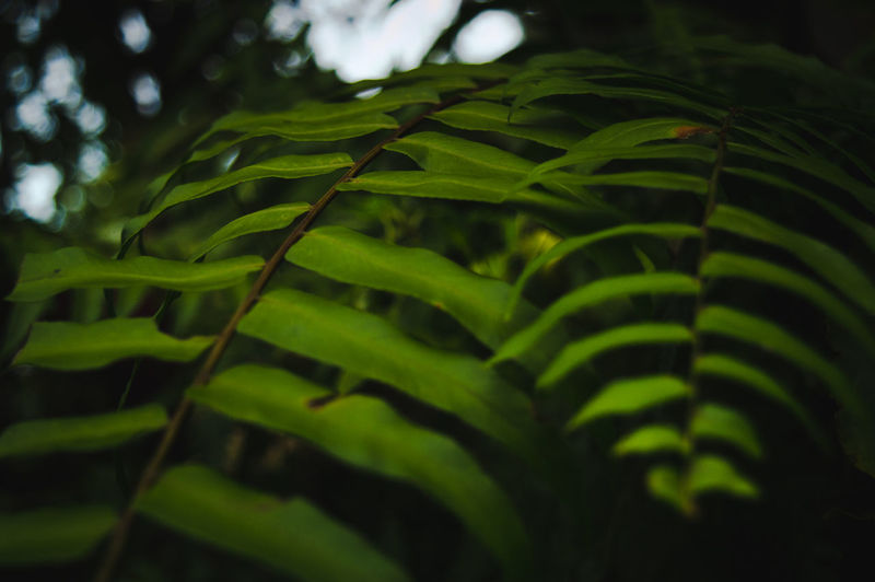 The Still Life Photographer - 2018 EyeEm Awards Beauty In Nature Close-up Day Fern Focus On Foreground Freshness Green Color Growth Land Leaf Leaves Natural Pattern Nature No People Outdoors Plant Plant Part Selective Focus Tranquility Tree