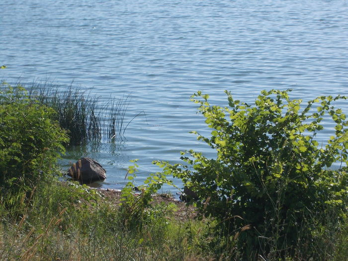 Lake water Beauty In Nature Bushes Day Grass Green Green Color Growing Growth Izvorska River Lake And Bushes Lake Shore Lakeshore Lakeshore Water Nature No People Non-urban Scene Outdoors Plant Rippled Rock In The Lake Rock In The Water Scenics Water Water Ripple Water Ripples