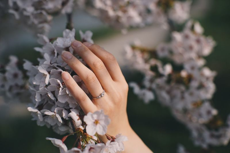 Cropped Hand Of Woman Touching Flowers Growing On Branch