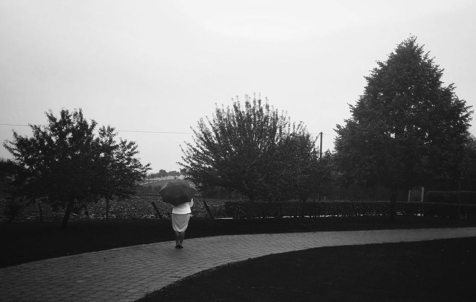 Trees - MAinLoveWithLightAndShadow and Big Girl with Umbrella Standing Alone In The Rain Rainy Rainy Days Monochrome Mono Monochrome Photography Monochromatic Monoart Monotone Black And White Bnw Bnw_collection Bnw_captures Bnw Photography Bw Street Street Photography Streetphoto_bw Street Art How I See People - 25.09.2017 - #Schoenstatt #DoerenerFeld #Benhausen #Paderborn