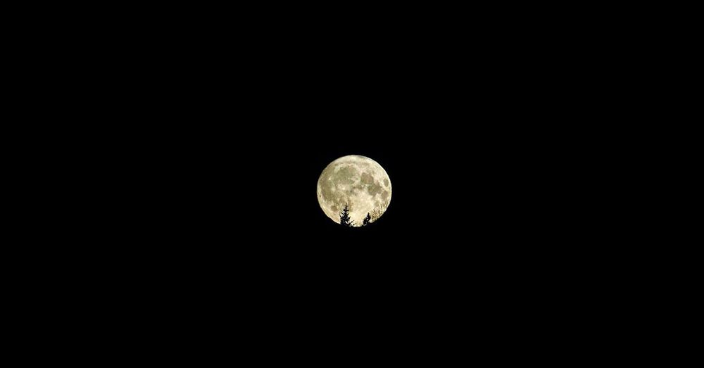 Goodnight moon.. Moon Night Astronomy Moon Surface Planetary Moon Full Moon Nature Copy Space Beauty In Nature Discovery Scenics Tranquility Space Exploration Half Moon Low Angle View Space No People Outdoors Sky Clear Sky EyeEmNewHere Beauty In Nature EyeEm Nature Lover Forest Trees EyeEmNewHere