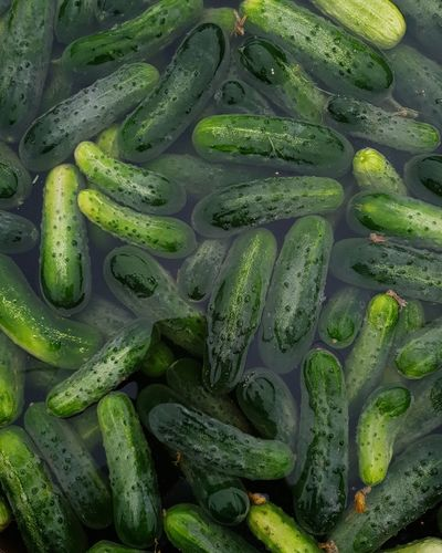 Bathing :) Cucumber Bathing Washing Greenery Harvest Vegetable Veggies Cucumber Plants Backgrounds Full Frame Water Close-up Green Color Pickle Farmland