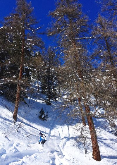 Showcase March Snowboarding Snow Off Piste Backcountry Alps Forest Winter Winter Wonderland Action Sports Trees Nature Bluebird Serre Chevalier