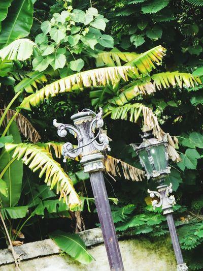 Keraton Kasepuhan Classic Vintage Visit Indonesia Vintage Lamp Lamp Lamps Street Lamp Street Lamps Lamp Post Banana Tree Banana Leaf in Cirebon  , INDONESIA