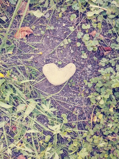 Heart-shaped Stone in the Garden . Pebble Rock Concept Close-up Nature No People Love Valentine's Day  Romantic Cobblestone Grass Herbs Ground Material Symbol Heart Shape