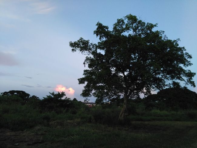 Tree Nature No People Night Outdoors Sky Beauty In Nature Astronomy