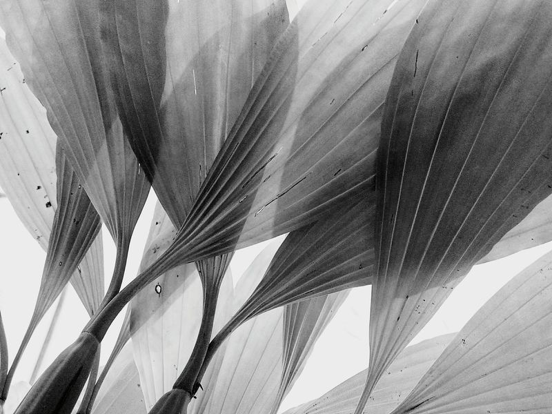 Leaf Leaves Nature Abstract Nature Art Photography Nature Art Leaf Photography Leaves Photography Leaf Collection Leaves Collection Close Up Close Up Photography Close Up Leaf Close Up Leaves Leaves Pattern Leaf Pattern Black And White Photography Black And White Black And White Leaf Black And White Leaves