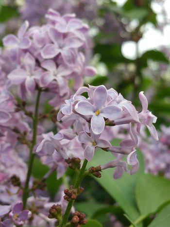 No Filter Nature Photography Spring Into Spring Violet By Motorola Secret Garden