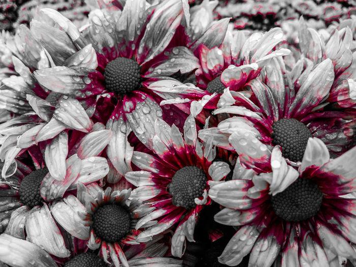 Flower Red Full