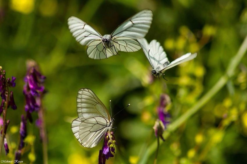 On The Move Nature Hello World Enjoying Life Taking Photos Macro_collection Butterfly Macro Beautiful Nature