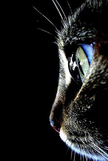 Taking Photos Beautiful Animal Portrait. Beautiful Blue Eyes Cat. Eyeem Nature Lover. Open Edit. Taking Photos.
