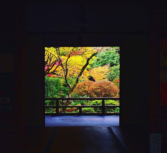 高桐院 大徳寺 Kyoto, Japan Kyoto Autumn 2015  Kyototrip Autumn Autumn Colors Enjoying Life Hello World Relaxing Kyoto