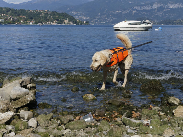 Dog Wearing Life Jacket By Beach