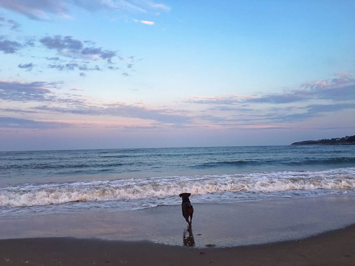 Tourists standing on beach