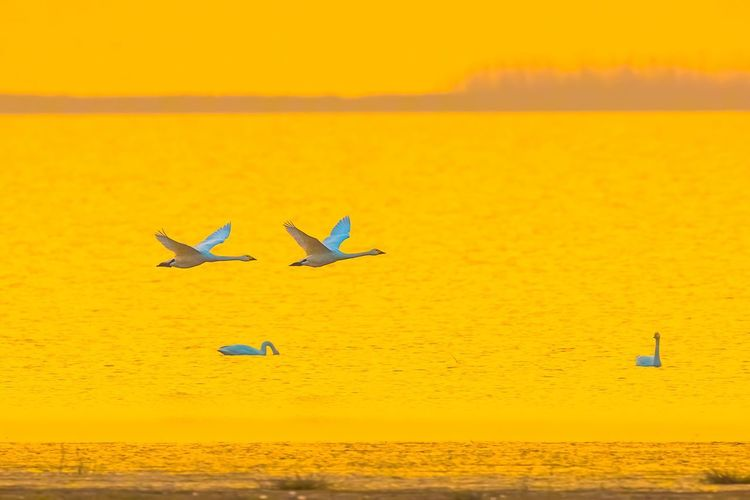 View of birds in sea against sky during sunset