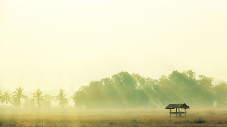 One morning on my way to work about a year earlier. Rural Scene Tranquility Morning Morning Light Landscape Fog Beauty In Nature Mist Environment Outdoors Countryside Non-urban Scene Field Tranquil Scene Hut Cottage Solitude Paddy Field Rice Field Nature Natural Beauty Beautiful Sunlight Sun Beams Capture Tomorrow It's About The Journey 2018 In One Photograph