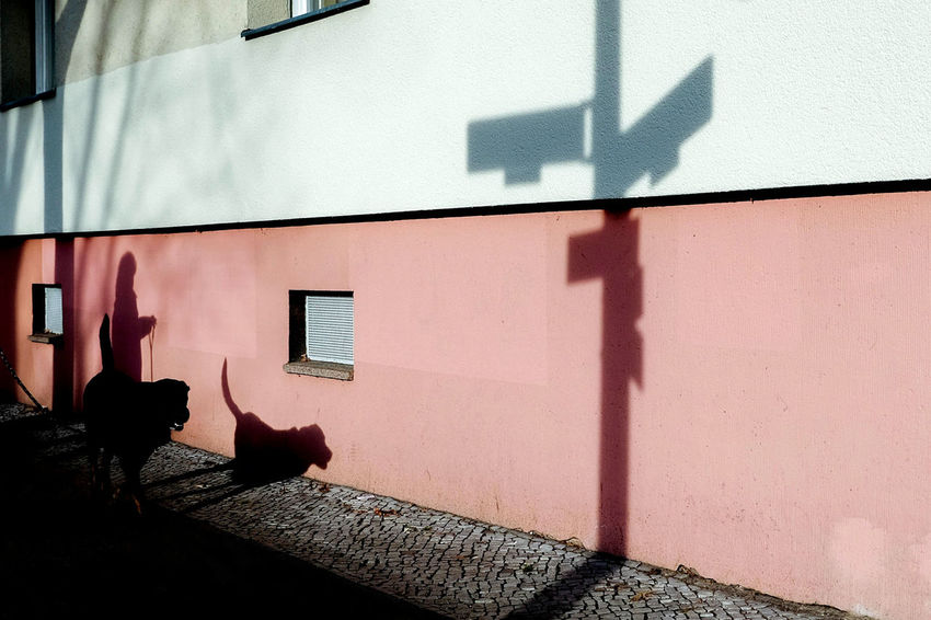 Berlin Dog Minimal Pets Road Signs Shadow Streetphotography Sunlight