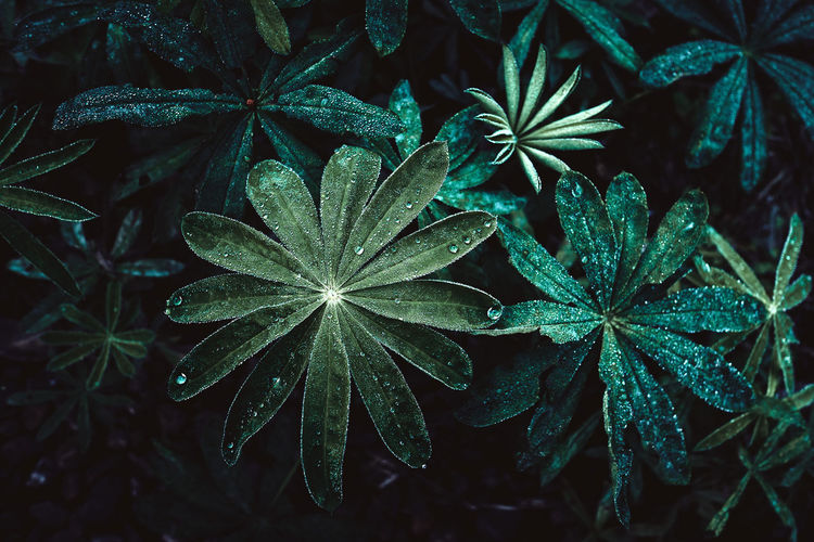 Sweden Beauty In Nature Bottom Close-up Dew Focus On Foreground Fragility Freshness Fujifilm Fujifilm_xseries Green Color Growth Leaf Leaves Nature Night No People Outdoors Plant Plant Part Selective Focus Tranquility Water Waterdrops Wet
