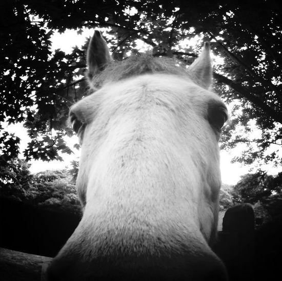 Horse Animal Black And White Close Up