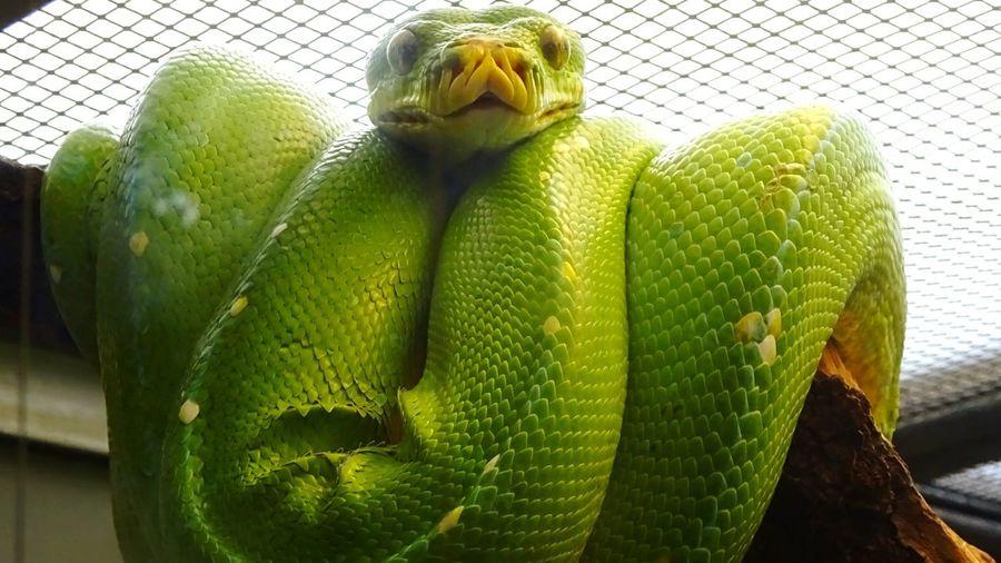 Snake Close-up