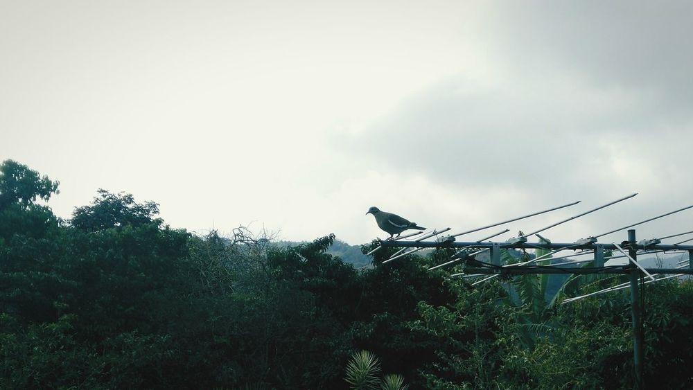 Birds Bird Photography Grey Sky Nature Nature+city