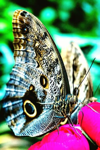 One Animal Animal Themes Wildlife Animals In The Wild Close-up Natural Pattern Butterfly Pattern Butterfly - Insect Focus On Foreground Animal Wing Nature Animal Markings Beauty In Nature Perching Zoology No People Fragility