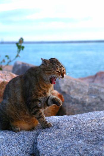 Cats Atlantic