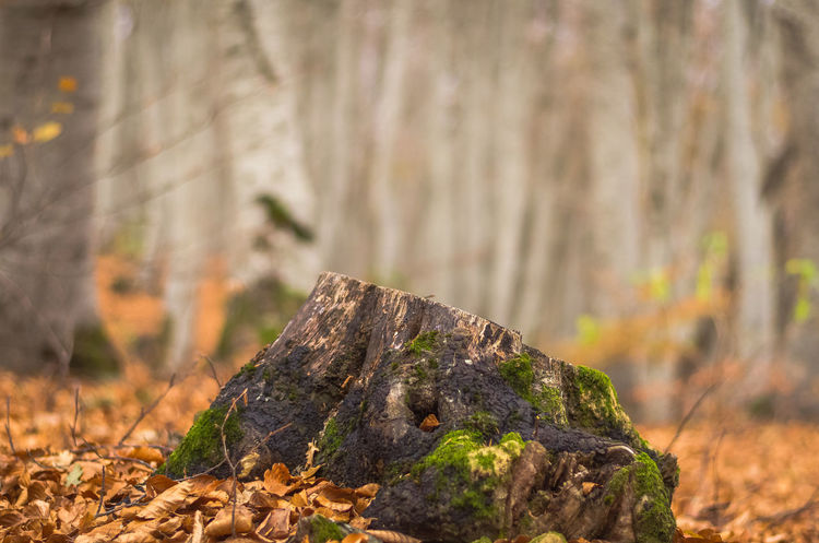 Exploring the small mountain town of Krushevo in Macedonia Autumn Beauty In Nature Branch Close-up Day Focus On Foreground Forest Leaf Nature No People Outdoors Tree Tree Trunk