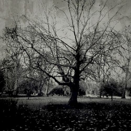 Blackandwhite Claunch 72 Monochrome Film Trees Lonely Tree Monochrome Bws_worldwide Eye4photography  Ee_daily Magical Trees Bw_collection