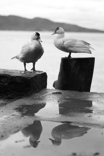 Birds perching on shore against sky