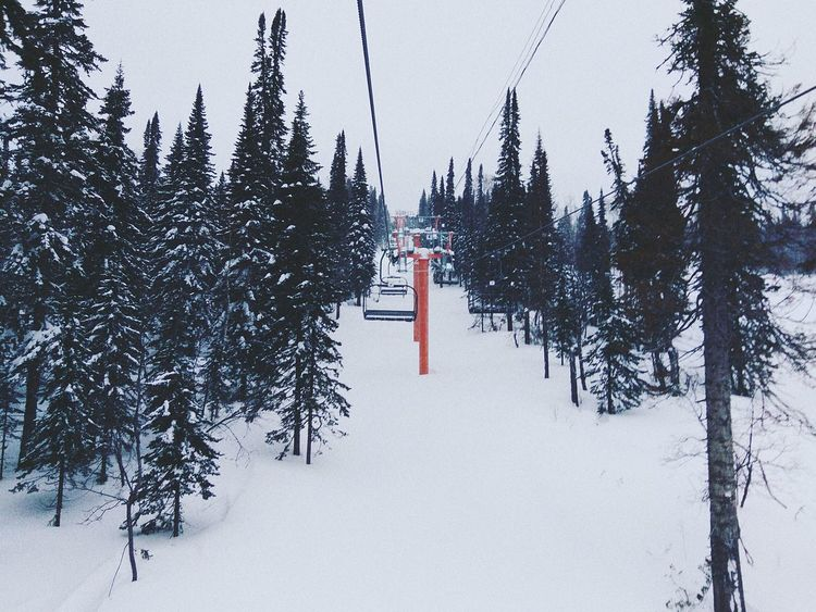 Snow Winter Tree Forest Nature Vacations Snowboarding Sheregesh Gesh Happy Travel