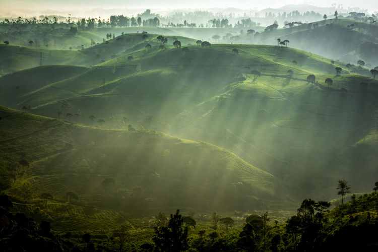 Ray of Light Rays Of Light Rural Scene Tree Terraced Field Hot Air Balloon Agriculture Rice Paddy Field Morning Farm Sky Patchwork Landscape