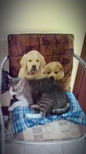 Cat&dog Indoors
