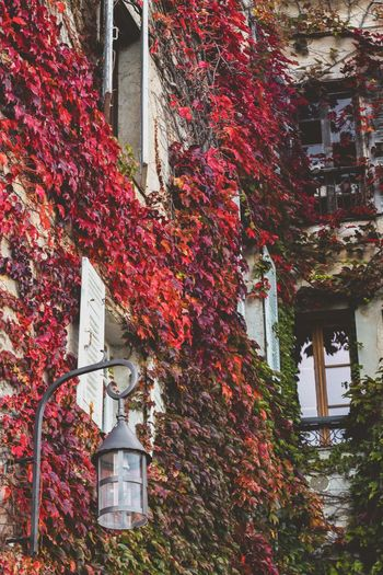 Low angle view of ivy growing on tree against building