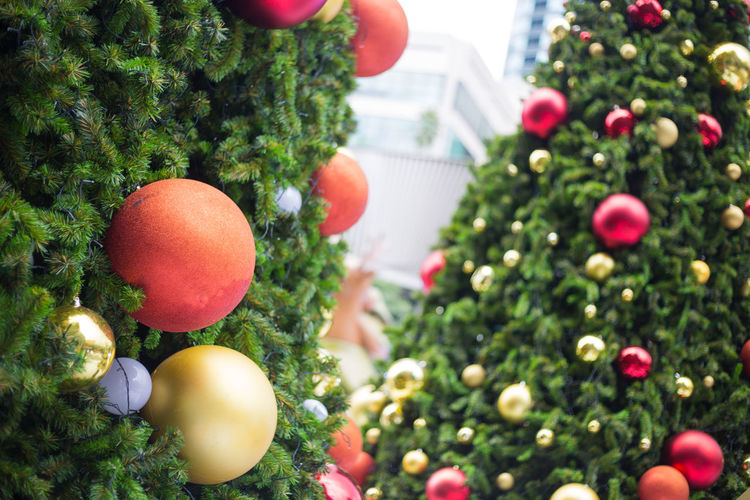 Close-up of christmas tree in city