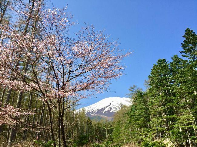 2018.04.29 #富士山 母から、地元の県展に写真を出さないか? と言われ、空回り中。 いつも急に言ってくるからなあ。 今年は無理かも。 来年出せるように頑張ろうかな? 富士山 Tree Plant Sky Beauty In Nature Nature Growth No People