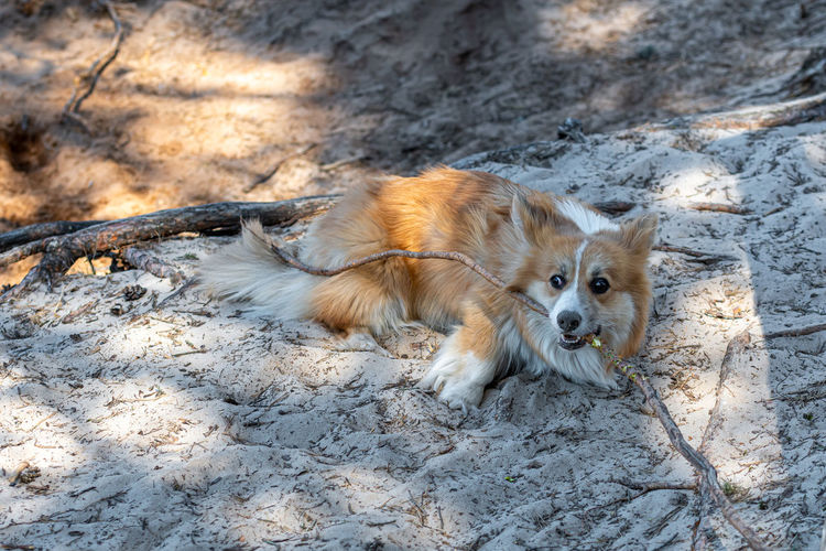 High angle view of dog relaxing on land