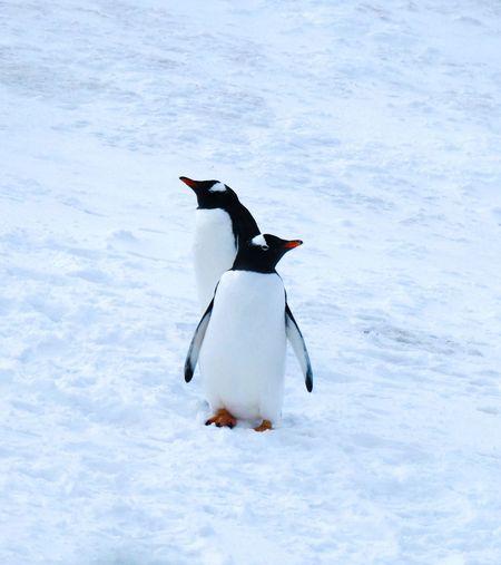 Full length of a bird in snow