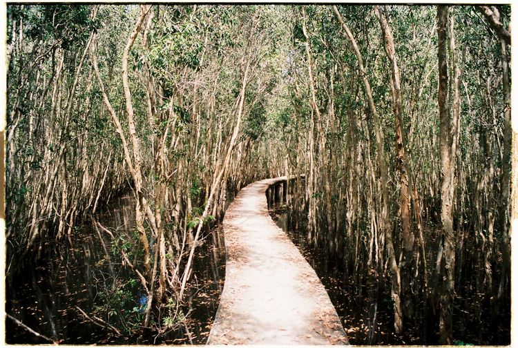 OlympusOM1 Film135 LongAncity Vietnam Mytrip Natural Breathe Trees