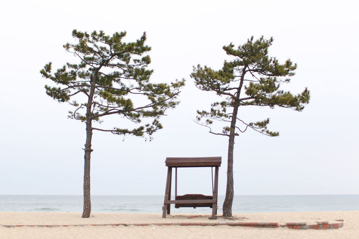 tranquility Swing Moody Loneliness Solitude Beauty In Nature Branch Chair Day Horizon Over Water Landscape Nature No People Outdoors Plant Sea Tranquility Tree Gangneung Beach