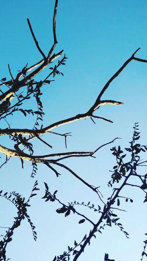 Nature Sky Tree