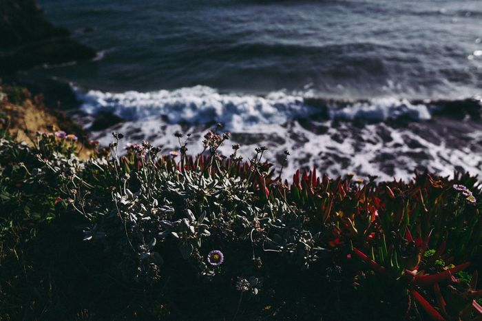 Focus On Foreground Sonoma Coast Northern California Pacific Ocean Sea Water Beauty In Nature Land Beach Plant Nature Wave No People Outdoors