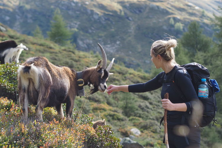 Young woman having an animal encounter with a goat Animals In The Wild Copy Space Goat Hiking Alps Animal Encounters Beauty In Nature Blond Hair Domestic Animals Focus On Foreground Goatlife Leisure Activity Mountain Mountainlife Nature One Person Outdoors Standing Switzerland Young Adult Young Women