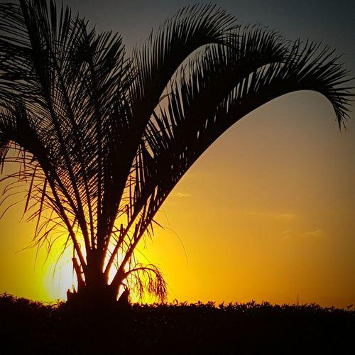 Marocco 2016 Sunset Silhouette Palm Tree No People Sun Nature Sky