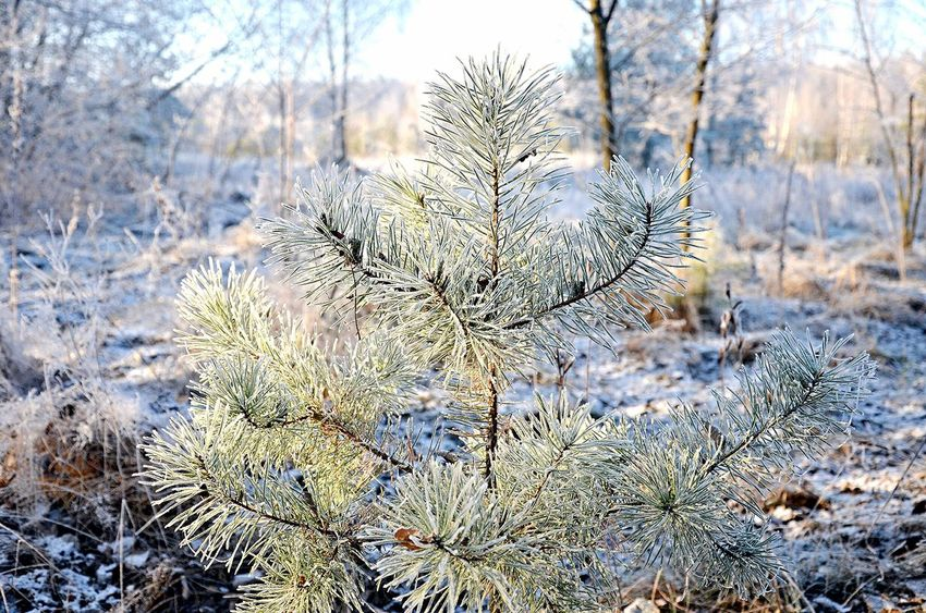 New Nature Creative зима