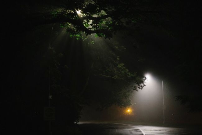Tree No People Night Illuminated Nature Outdoors Beauty In Nature Growth Branch Sky
